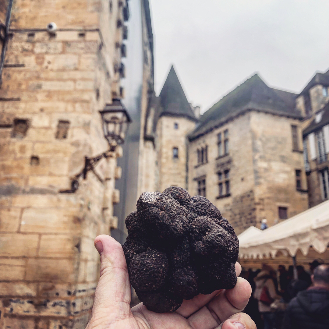 Photo d'une truffe avec en arrière plan Sarlat la Canada